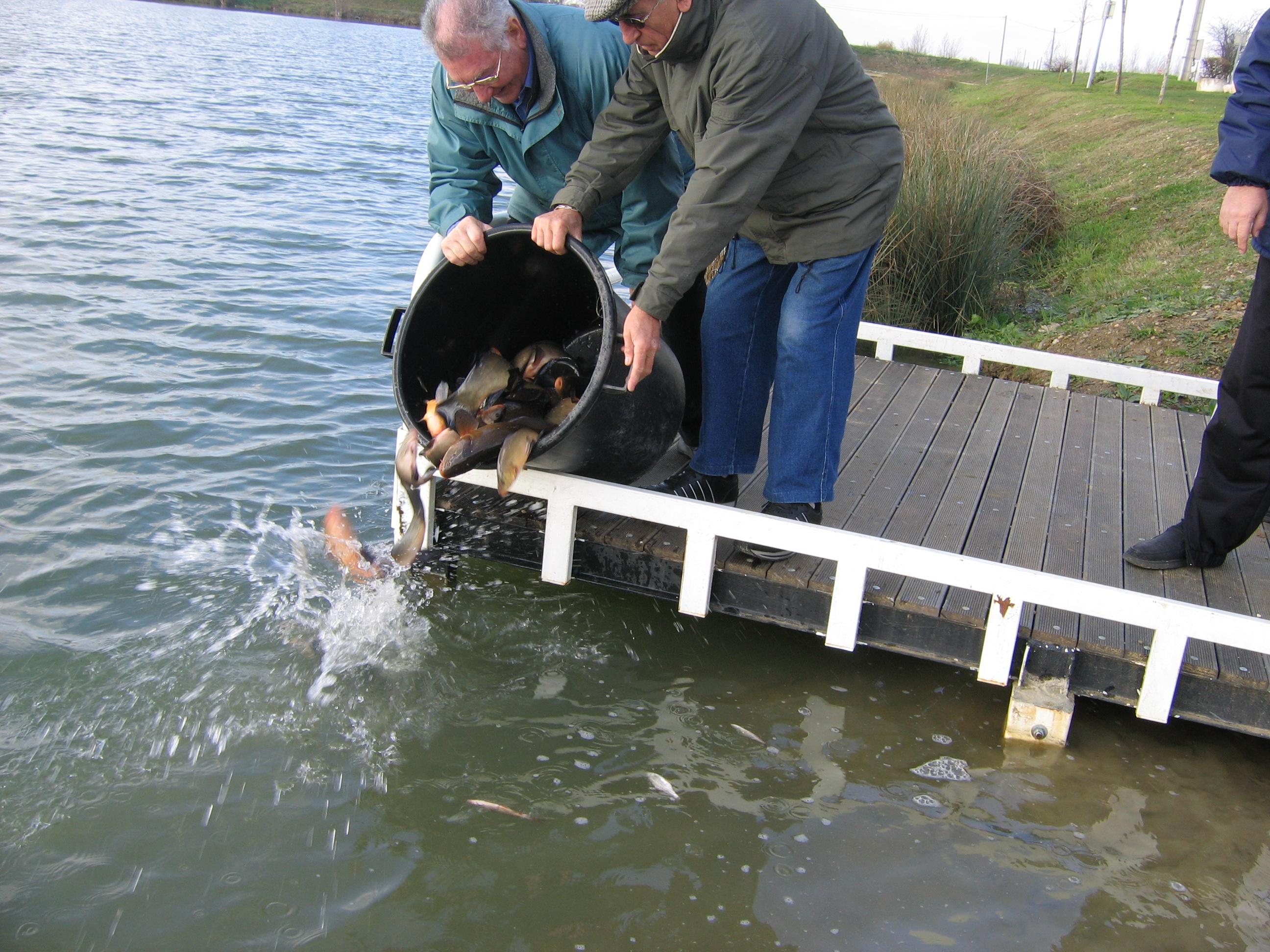 Alevinage en Poissons blancs - Association de Pêche 31